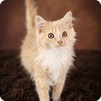 Adopt A Pet :: Buffy - Plymouth, MN