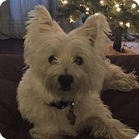 Adopt A Pet :: WALLY HAS BEEN ADOPTED - Frisco, TX