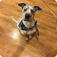 Adopt A Pet :: Pepper - Los Banos, CA