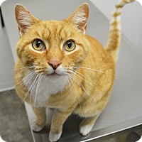 Adopt A Pet :: Buckeroo Bob - Springfield, IL