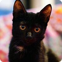 Adopt A Pet :: Aria - N. Billerica, MA