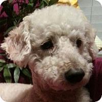 Adopt A Pet :: Timothy - La Costa, CA