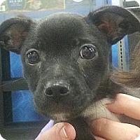 Adopt A Pet :: Baby#1M - Orlando, FL