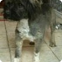 Adopt A Pet :: Chase - Justin, TX