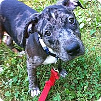 Adopt A Pet :: Toby - Richmond, VA