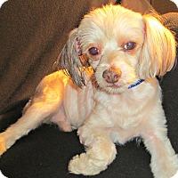Adopt A Pet :: Rocco-VA - Mays Landing, NJ