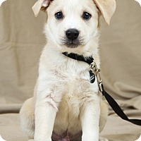 Adopt A Pet :: Stewart - Oklahoma City, OK