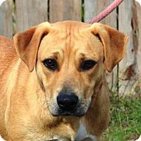Adopt A Pet :: **JEFF ** MEET FEB 13TH! - Mukwonago, WI