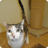 Adopt A Pet :: Giovanna - Milwaukee, WI