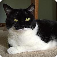 Adopt A Pet :: Rosalee - Naperville, IL