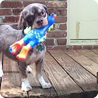 Adopt A Pet :: Asbury - Alpharetta, GA