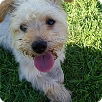 Adopt A Pet :: Sparky - Los Angeles, CA