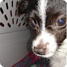 Adopt A Pet :: Boris