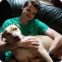 Adopt A Pet :: Ono - Sudbury, MA