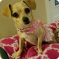 Adopt A Pet :: CeCe - San Diego, CA
