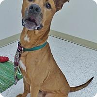 Adopt A Pet :: Tate - Chambersburg, PA