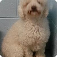 Adopt A Pet :: Toby - Muskegon, MI