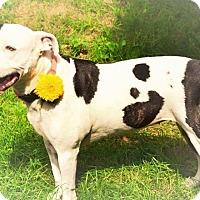 Adopt A Pet :: Lucy - Eastpointe, MI