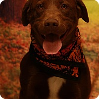 Adopt A Pet :: Banjo - Twin Falls, ID