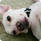Adopt A Pet :: Hwan