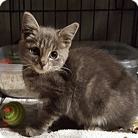Adopt A Pet :: Angel - Irwin, PA