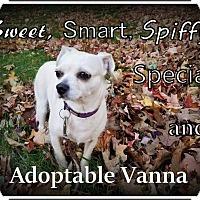 Chihuahua/Maltese Mix Dog for adoption in Frederick, Maryland - Vannah