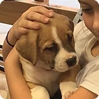 Adopt A Pet :: Georgie - Alpharetta, GA
