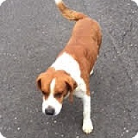 Adopt A Pet :: Charlie - Union City, TN