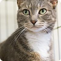 Adopt A Pet :: OLIVE - Houston, TX
