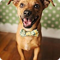 Adopt A Pet :: Peanut - Nashville, TN