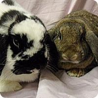 Adopt A Pet :: Oreo - El Cerrito, CA