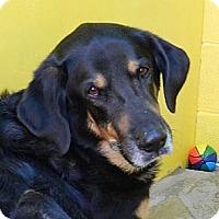 Adopt A Pet :: URGENT URGENT - Sacramento, CA