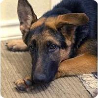 Adopt A Pet :: Matilda - Dripping Springs, TX