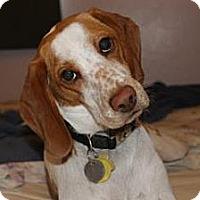 Adopt A Pet :: Jane - Phoenix, AZ
