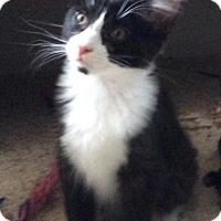 Adopt A Pet :: Neo - Sacramento, CA