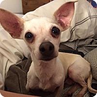 Adopt A Pet :: Lucille - Arlington, TX