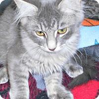 Adopt A Pet :: Kisses - Chesapeake, VA