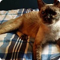 Adopt A Pet :: Akemi - Palatine, IL