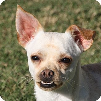 Small Dogs For Adoption In Edmonton Alberta