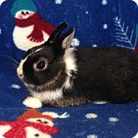 Adopt A Pet :: Kishka - Williston, FL