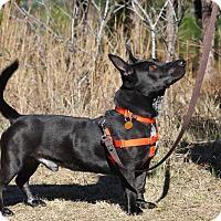 Adopt A Pet :: Miles - Pinehurst, NC
