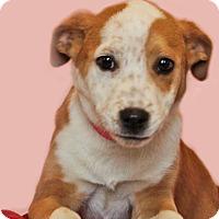 Adopt A Pet :: Gypsy - Waldorf, MD