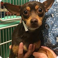 Adopt A Pet :: Waldo - Oak Ridge, NJ