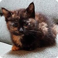 Adopt A Pet :: Maat - Trenton, NJ