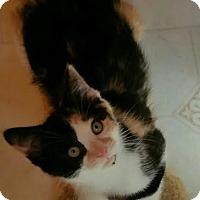 Adopt A Pet :: Colleen - Ortonville, MI