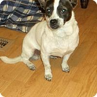 Adopt A Pet :: Lorenzo - Crossville, AL