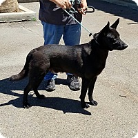 Adopt A Pet :: DUKE - Gustine, CA