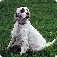 Adopt A Pet :: Piper - New Braunfels, TX