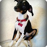 Adopt A Pet :: ARCHIE - Barium Springs, NC
