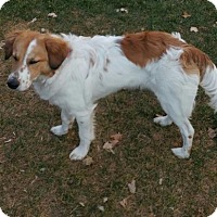 Adopt A Pet :: CO/Jasper (ADOPTION PENDING) - Oroville, CA